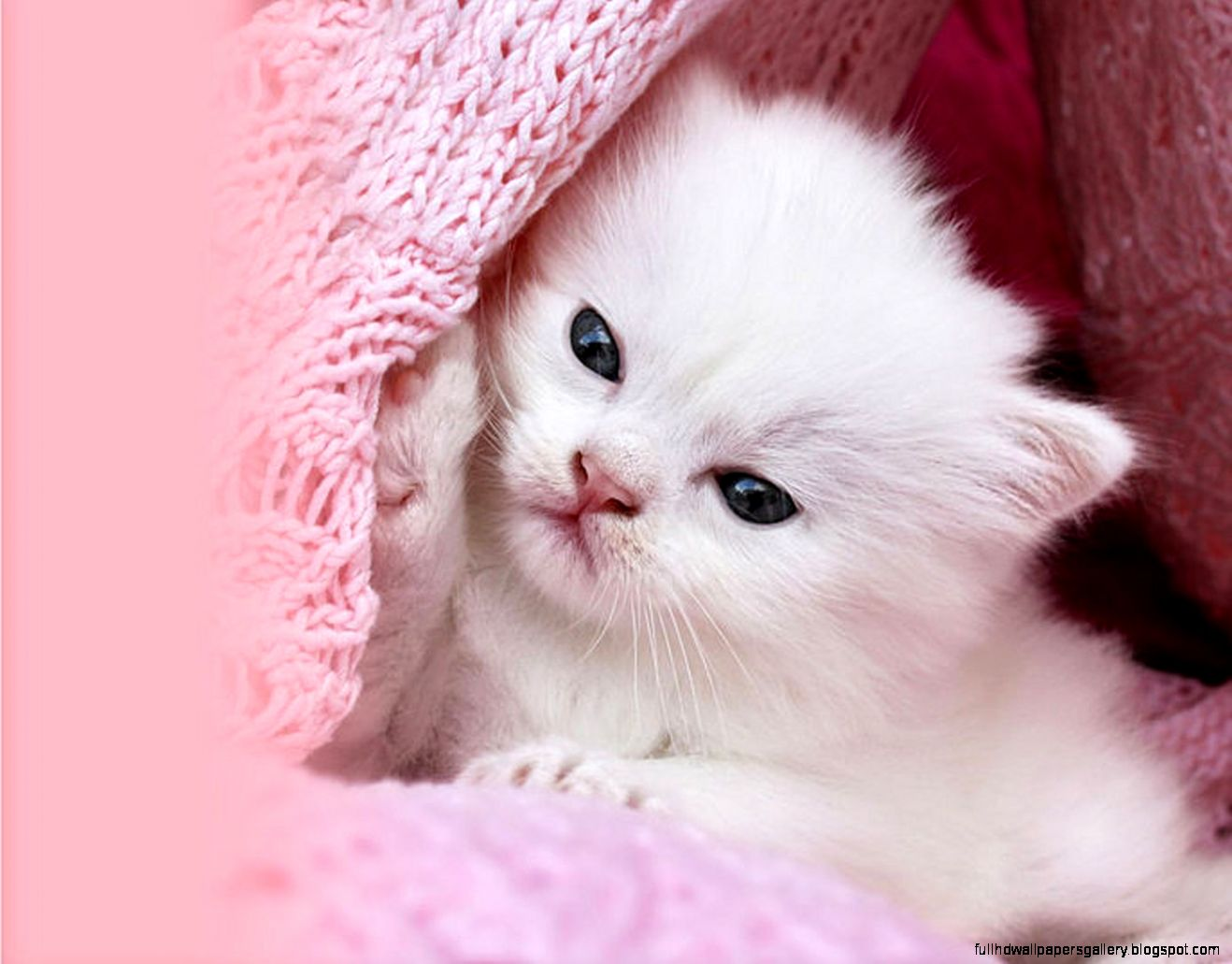 Hello Kitty Images Hd Cute Desktop Pink Full Hd Wallpapers