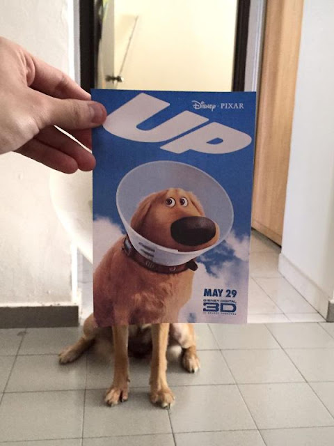 Bộ ảnh hài hước của đội quân chó tinh nghịch