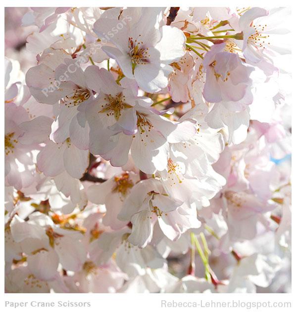 Becca Blossoms Nude Photos 90