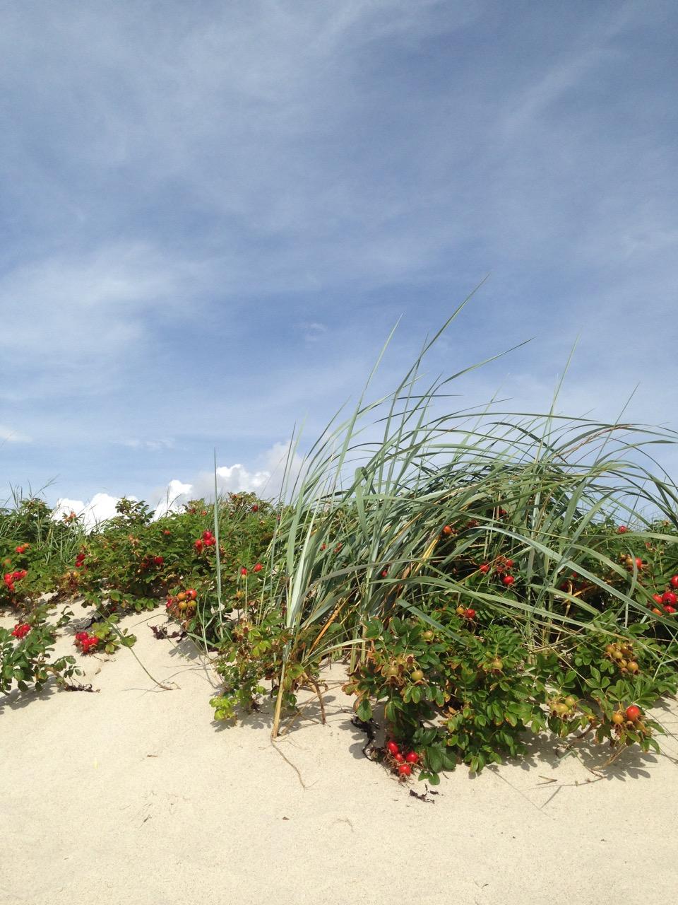Dänemark: Dünenlandschaft auf Kegnaes / Visual Vest