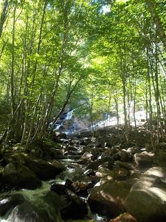 Vallée-Bras-du-Nord, cascade, forêt, paysage, l'été