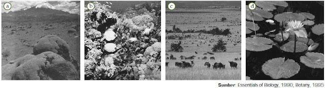 Keanekaragaman Hayati Tingkat Spesies dan Tingkat Ekosistem