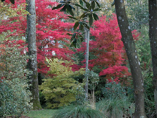 Arboretum des Pres des Culands : samedi 8 et dimanche 9 novembre 2014