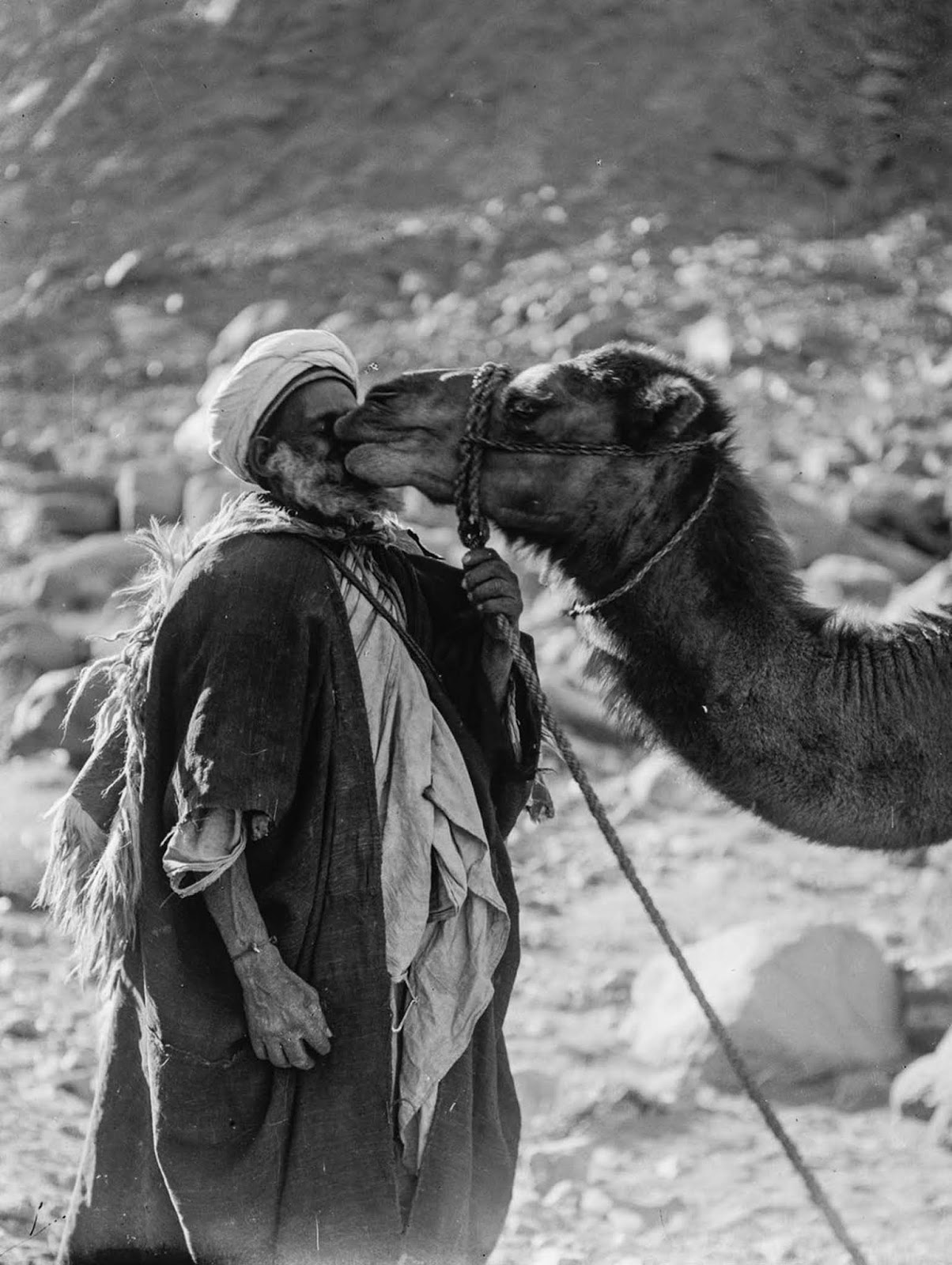 An elderly Bedouin and his camel.