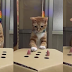 "WATCH: Funny Adorable Cat ""I can catch this"""