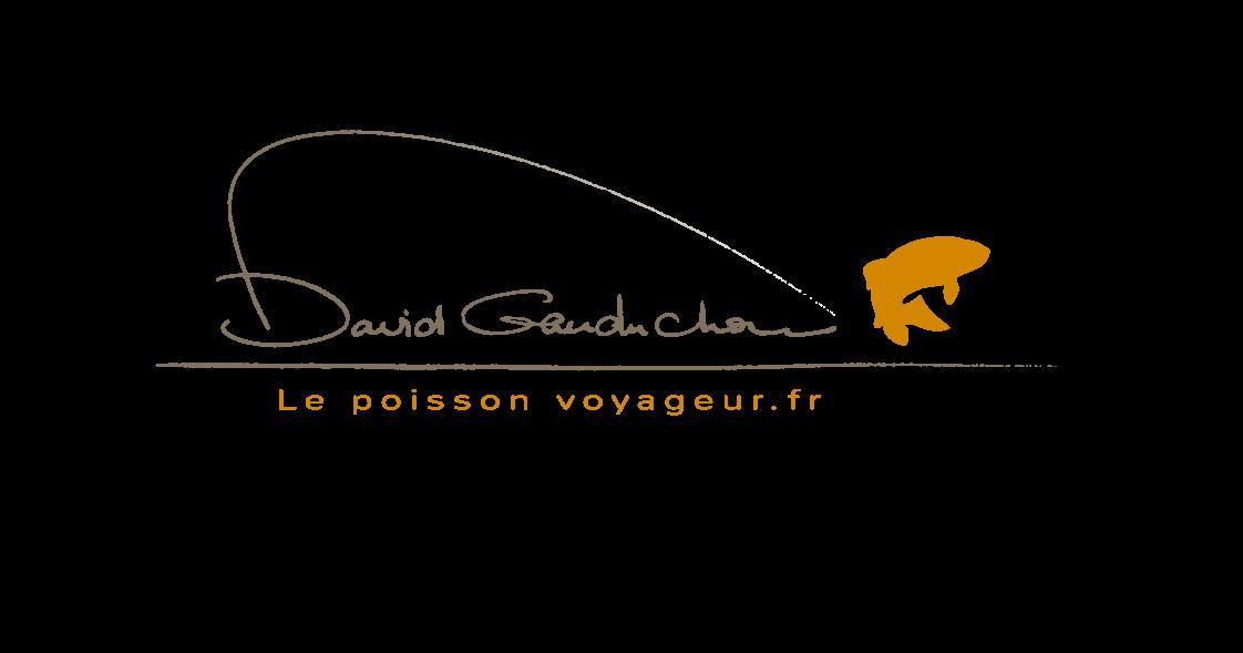 La pêche dans le domaine de Volgograd de vidéo la carpe