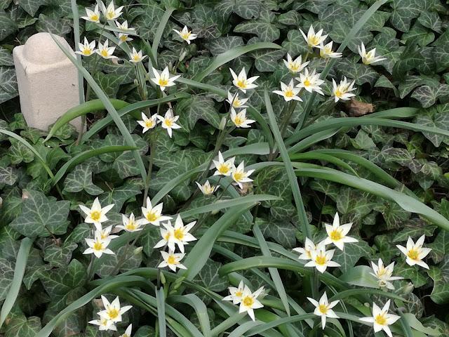 wczesna wiosna w ogrodzie