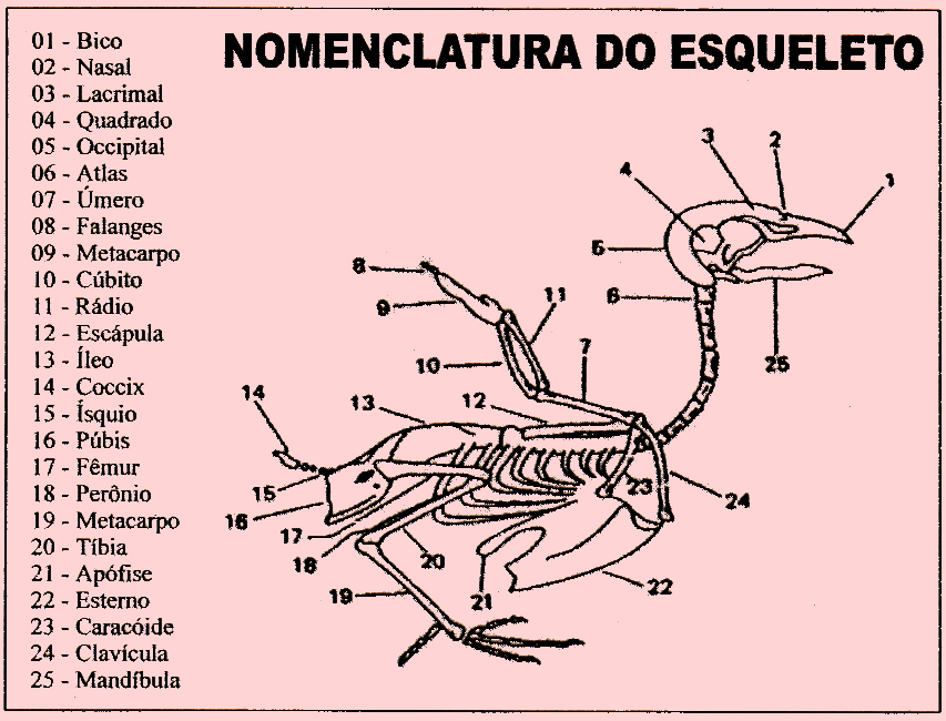 Can rio e cia o terr vel peito seco caquexia for O osso esterno e dividido em