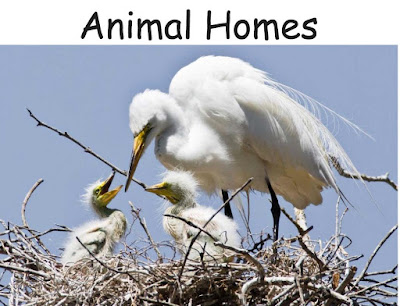 Animal Homes – Early Readers pdf