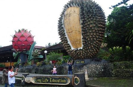 Warso Farm Agro wisata buah durian