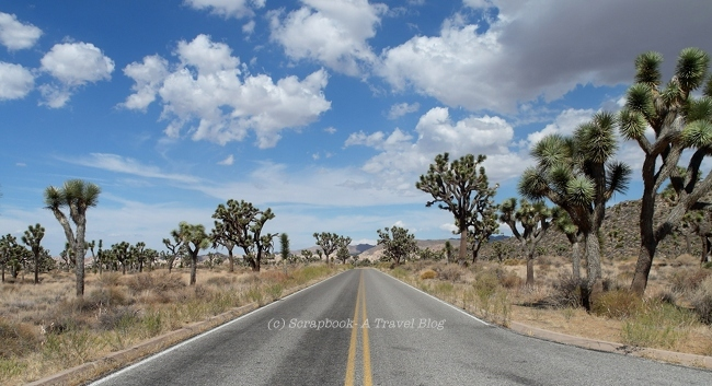 Long roads at Joshua Tree National Park