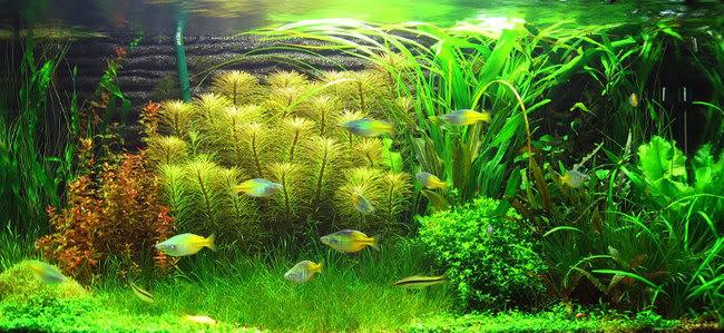 12 Jenis Gaya Aquascape Untuk Ide Konsep dan Model ...
