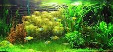 5 Jenis Gaya (Style) di Aquascape
