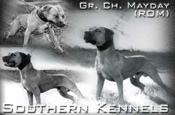 INTERVIEW WITH VICTOR AYCART OF SOUTHERN KENNELS | SPORTING DOG NEWS