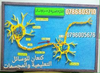 38451481 1111497495668093 4641524174139949056 n - مجسمات ومشاريع لتدريس العلوم