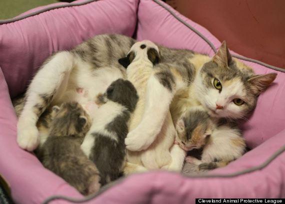 7 lời khuyên quan trọng trước khi nuôi một chú mèo lạc