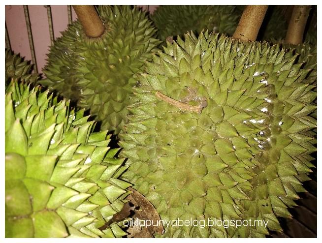 Bila pokok durian meriah berbuah...