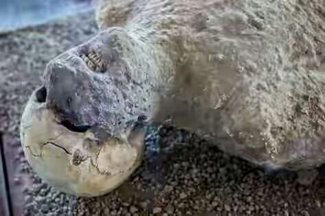 Foto-Foto Fosil Suku Pompey, Peringatan Bagi Manusia...!!!