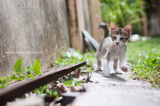 gambar anak kucing comel, anak kucing hilang, seronok bela kucing, seronok beri makan kucing, gambar anak kucing comel dan manja, anak kucing putih,
