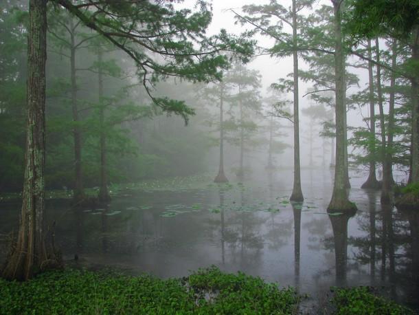Mississippi Sam D. Hamilton Noxubee National Wildlife Refuge