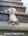 cuidados com cães na escada
