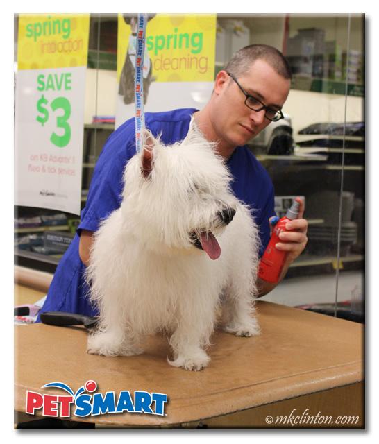 Male PetSmart groomer spritzing Westie with CHI Detangler