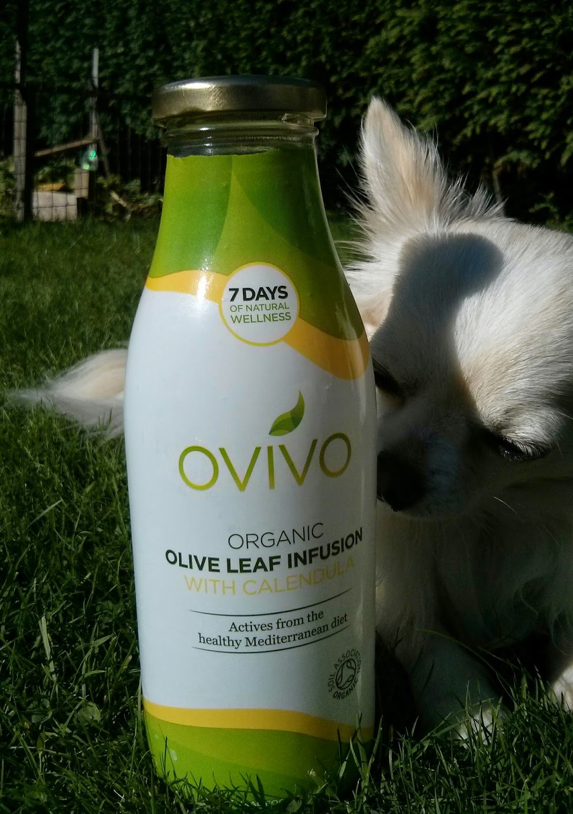 Ovivo Organic Olive leaf Infusion with Calendula* (and Pepe)