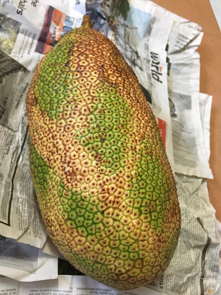buah cempedak, buah-buahan tempatan, cempedak goreng