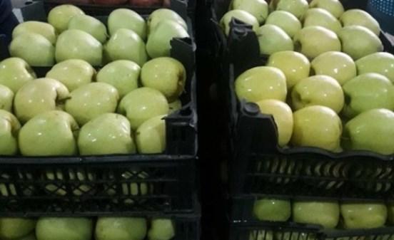 فتح باب شراء التفاح من وحدات التبريد بشكل مباشر بالسويداء