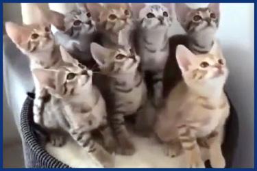 Katzenvideos zum Ablachen