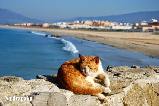 Udar cieplny u kotów