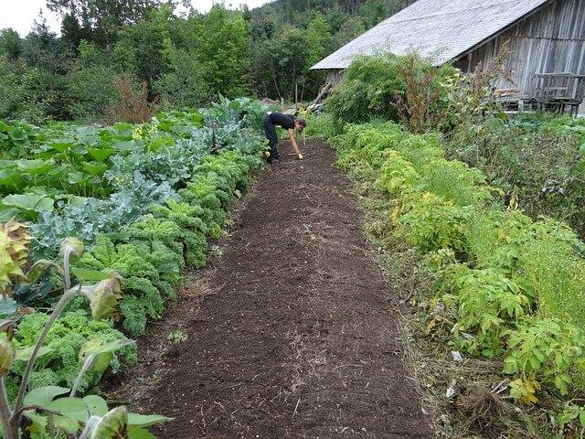 el boom de la agricultura organica