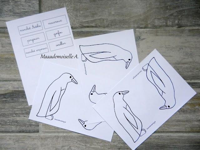 || Activité autour des cartes de nomenclature : Représenter et comparer des animaux (manchot empereur, gorfou, macareux, manchot Adélie et pingouin)