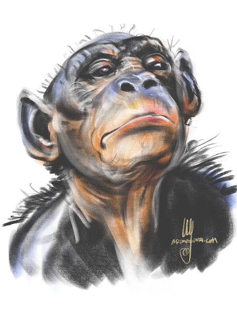 Bonobo Chimpanzee Sketch by Artmagenta