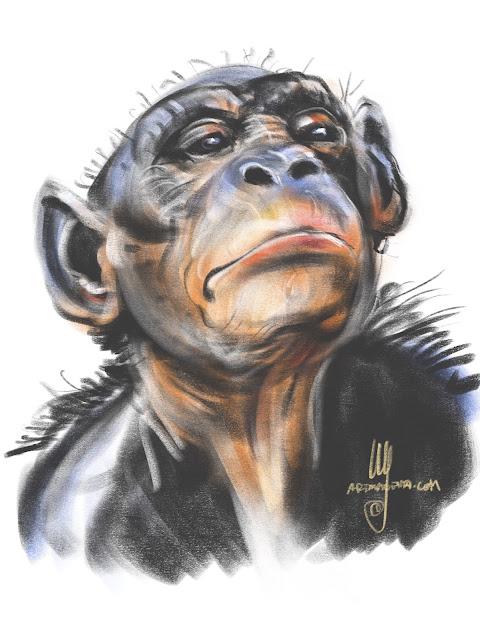 Bonobo Chimpanzee Sketch by Artmagenta
