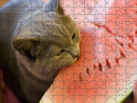 Cat and watermelon Puzzle