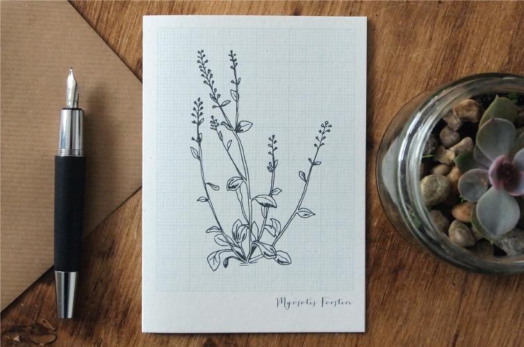 New Zealand Botany - Alfie's Studio