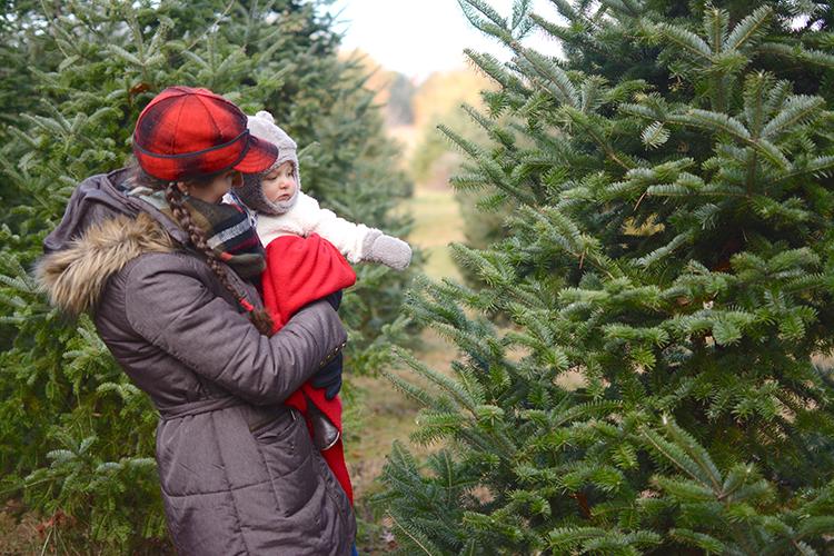 2017 Christmas Tree Hunting | My Darling Days