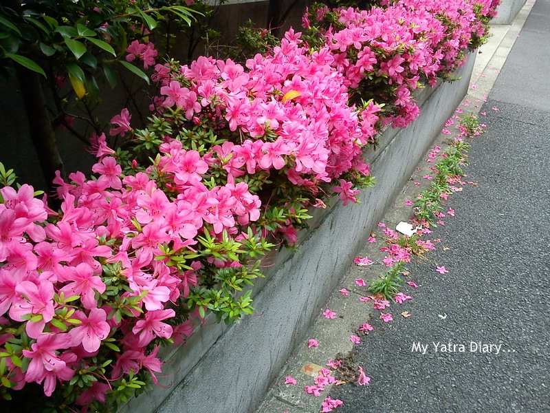Pedestrian pathways and roadways full of flowers, Tokyo - Japan