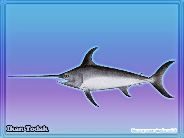 Unduh 920+ Gambar Animasi Ikan Tongkol HD Gratis