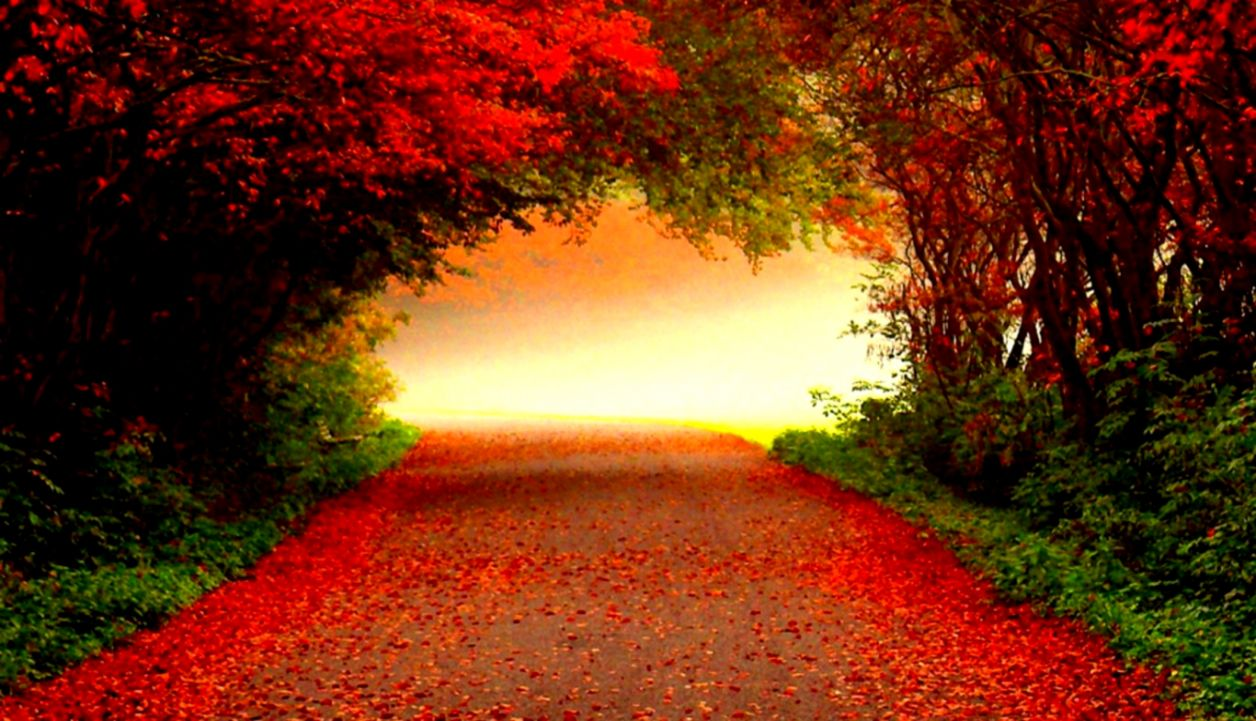 Wallpaper sunlight trees forest fall nature red tree autumn