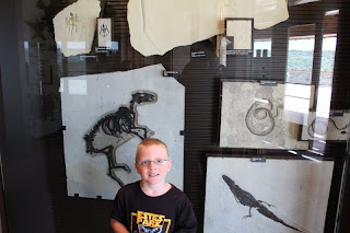boy in front of dinosaur fossils