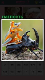 лягушка сидит на спине жука, проявляя наглость