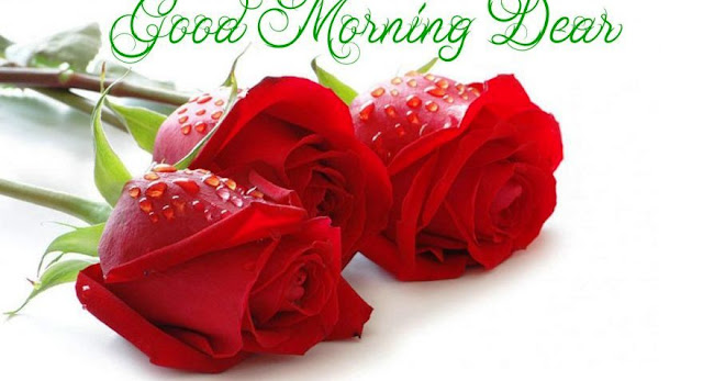 good morning romantic rose