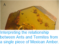 http://sciencythoughts.blogspot.co.uk/2014/10/interpreting-relationship-between-ants.html