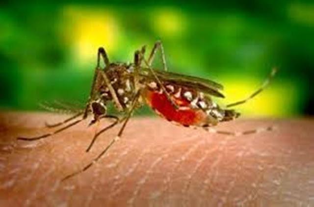 Inilah Penyebab Dan Ciri-Ciri Demam Berdarah (Demam Dengue/DBD)