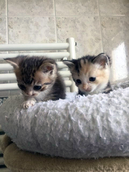 Little kittens found abandoned in a shoebox