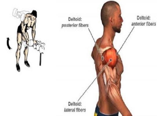 6 Tips for Bigger Shoulders