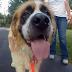 ΜΕΤΑ ΑΠΟ 5 ΧΡΟΝΙΑ βρέθηκε χαμένος σκύλος...
