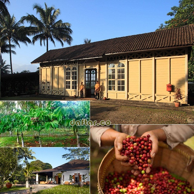 Losari Coffee Plantation Magelang